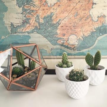 details-kaktus-und-karte