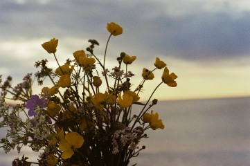 11 Blumen