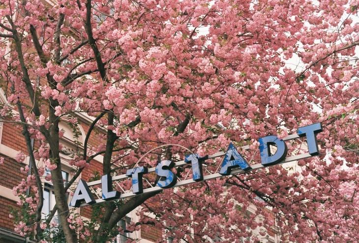 Altstadt und Blueten